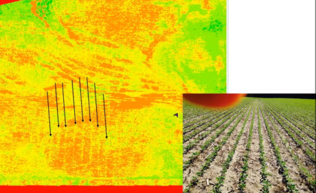 NDVI crop health surveys