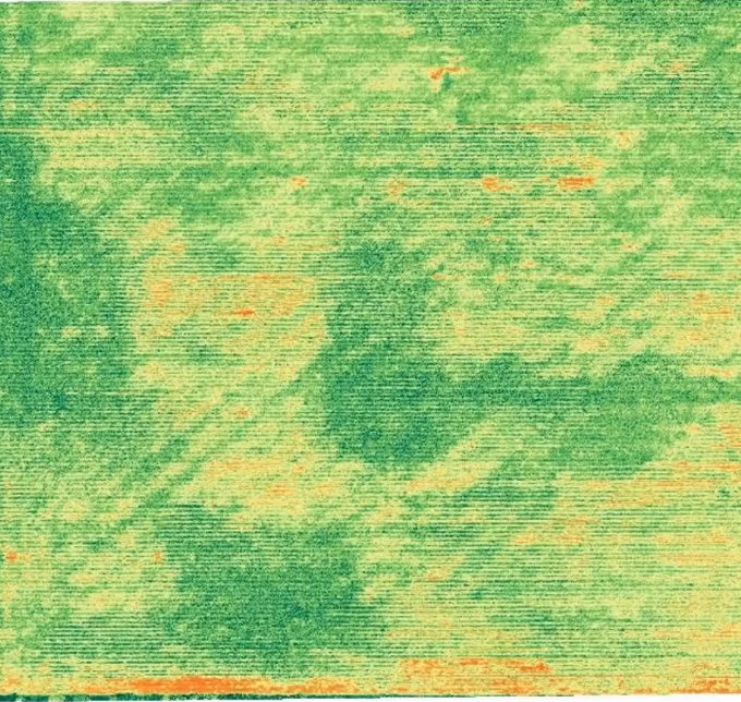 corn-field-with-diagonal-lines