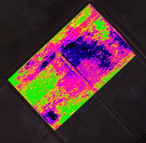 cotton farm NDVI