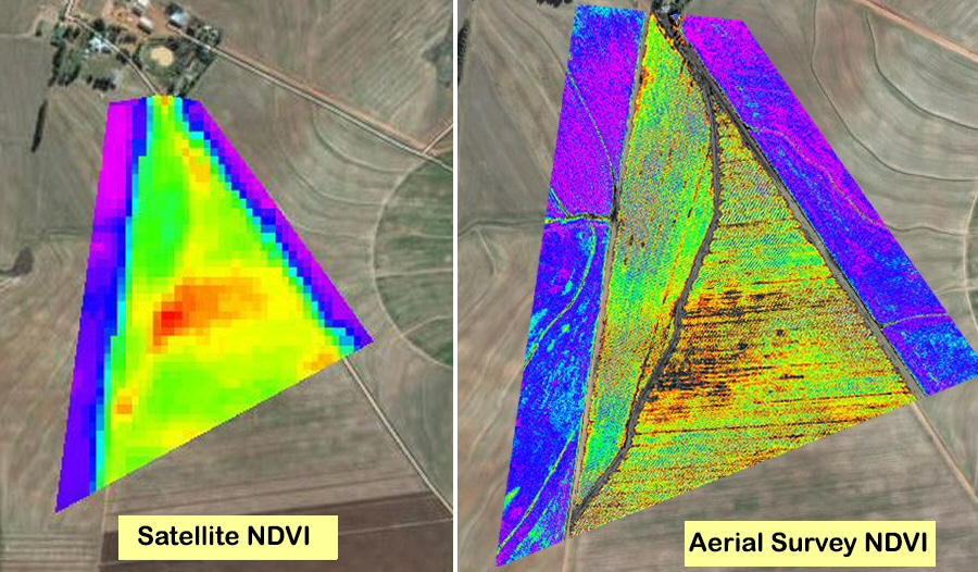 Comparison of satellite NDVI with aerial survey NDVI captured by a drone